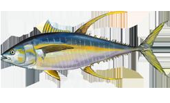 Yellowfin_tuna.png
