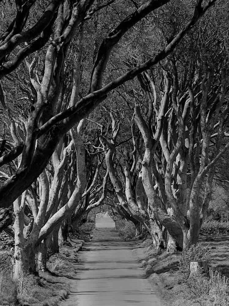 hedges_2.jpg