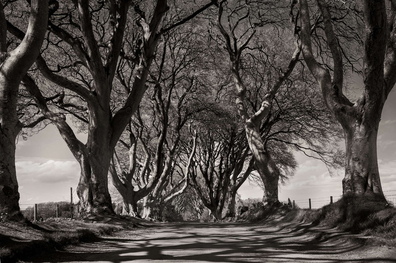 hedges_1.jpg