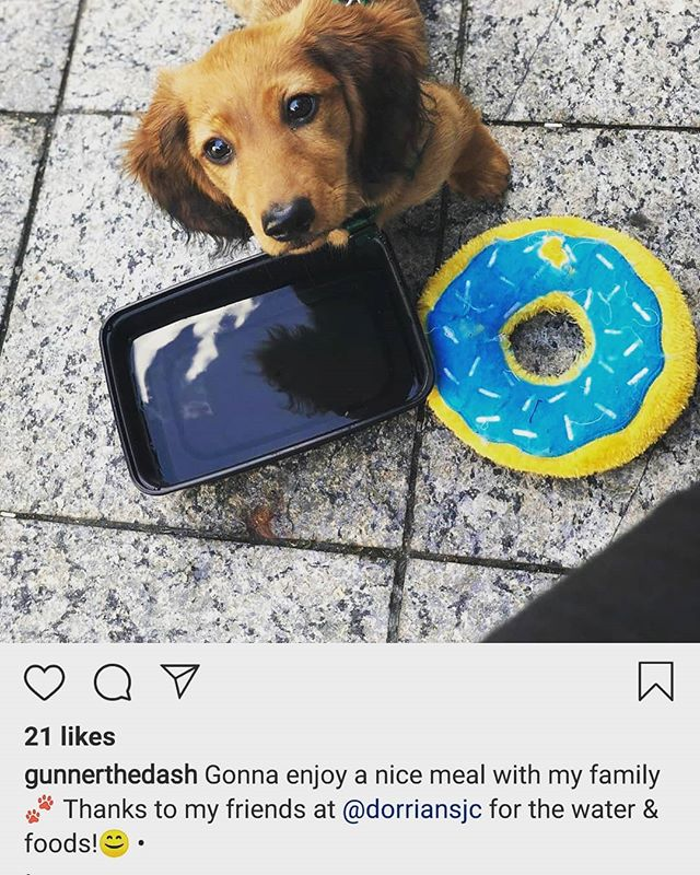 Thanks! @gunnerthedash hope to see you again soon ... Bring all your furry friends to enjoy our patio this season. * * * * * #dashundsofinstagram #dogs #pupsofinstagram #furry #furryfriends #jerseyfood #jceats
