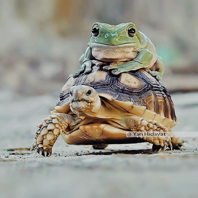 """No one is useless in this world who lightens the burdens of another."" -Charles Dickens 📷🐸 🐢 @yan_hidayat_567  _____________________________ . . . . . ⠀⠀ #holisticwellness #charlesdickens #alteuism #mindfulliving #lifestylecoaching #lifecoaching #holisticlifestyle #mindbodygram #mindfulness #portfoliocareer #liveinspired #londonlifecoach #mindset #thegoodhedonist #lifewelllived #alifewelllived #carpediem #wanderlust #yolo #colourfullife #knowledgequote #liveinthemoment #beyourself #personalgrowth #creativechics #inspirationalquotes #travelista #inspirationalmen #positivethinking #organicwellness via @preview.app"