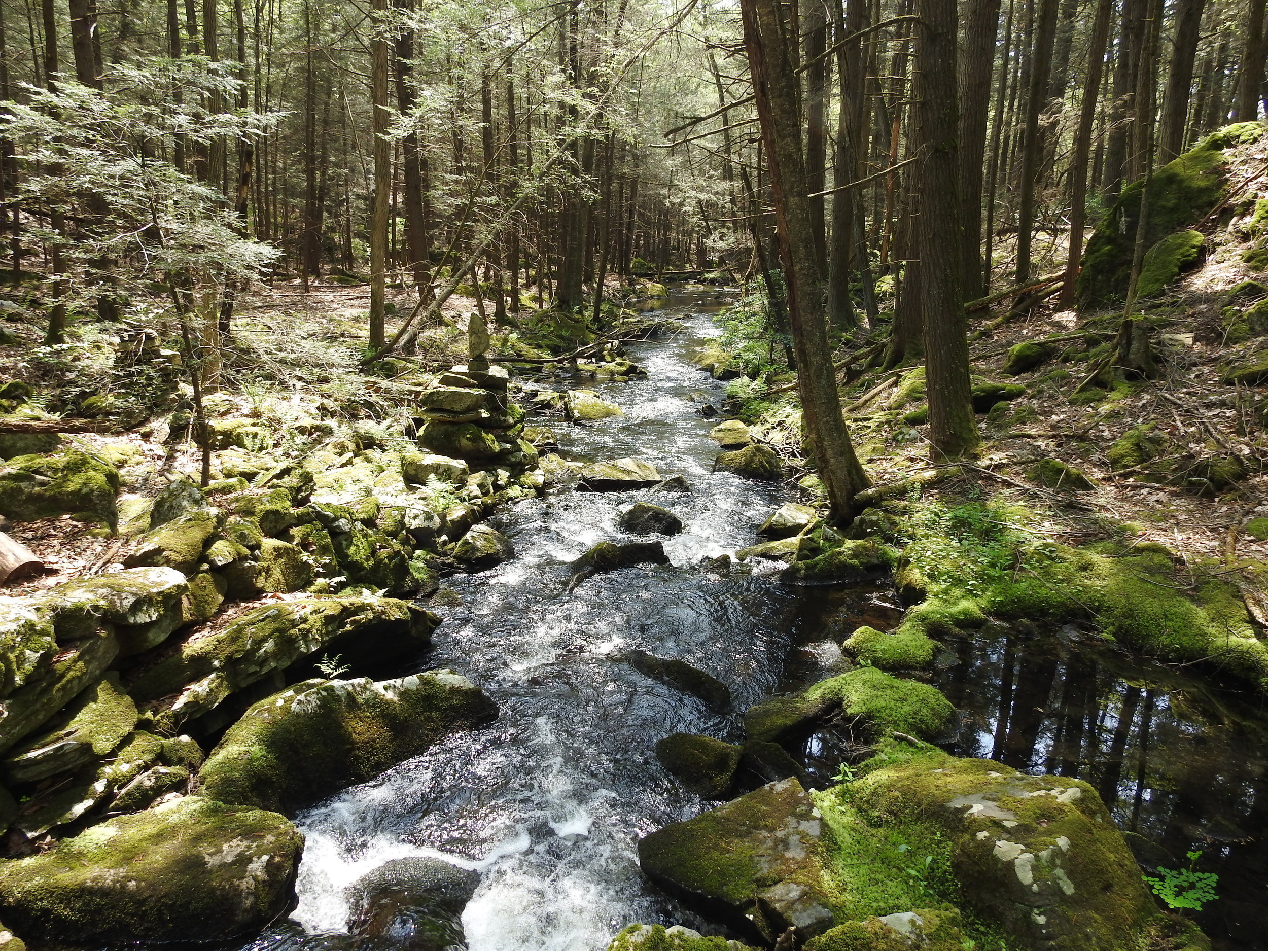 Mattatuck Trail brook.JPG