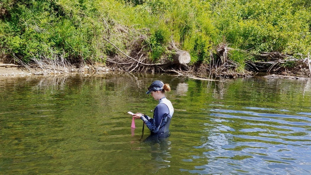 Kate O'Neill, a masters student from BCIT and SFU, measuring temperature and depth in the Tsolum River