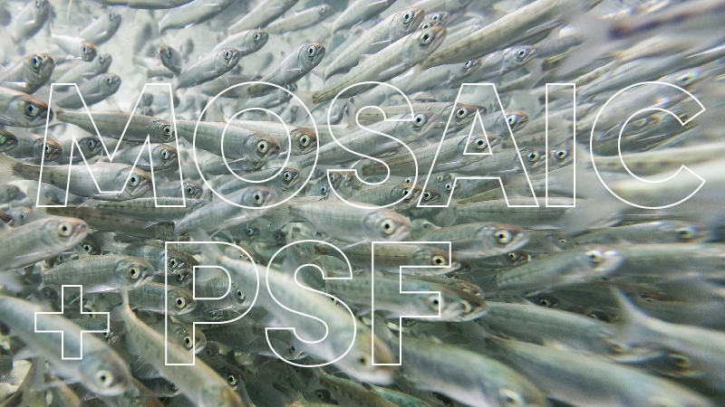 PARTNERSHIP WITH PACIFIC SALMON FOUNDATION PROVIDES EDUCATION, MONITORING AND RESTORATION.   Read the PSF announcement here . —  Read the Mosaic announcement here .