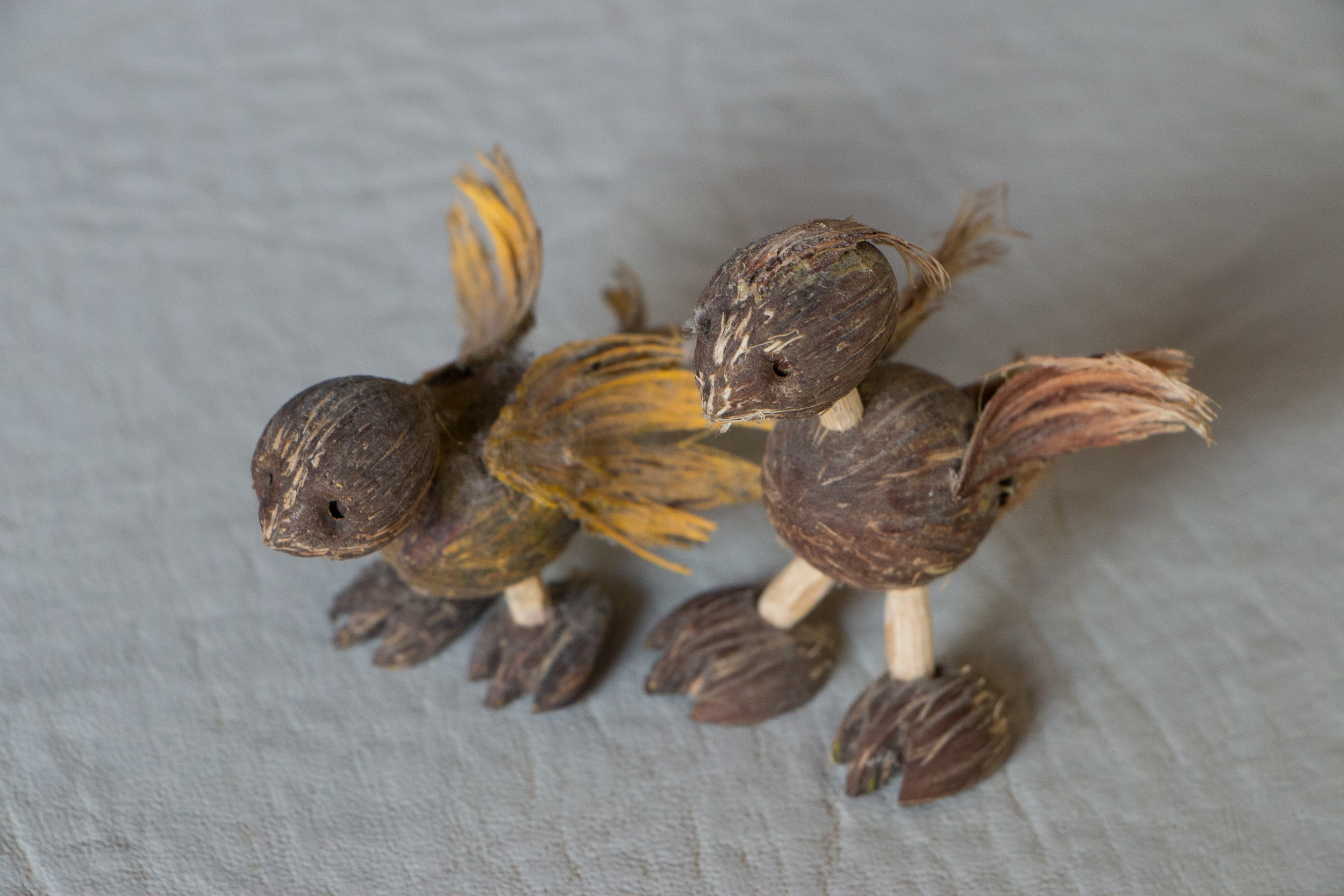 Two little chicken made of licuri nuts, a gift that I received from Carine Rubinho and her dad while doing fieldwork in Serrinha, Bahia, Brazil