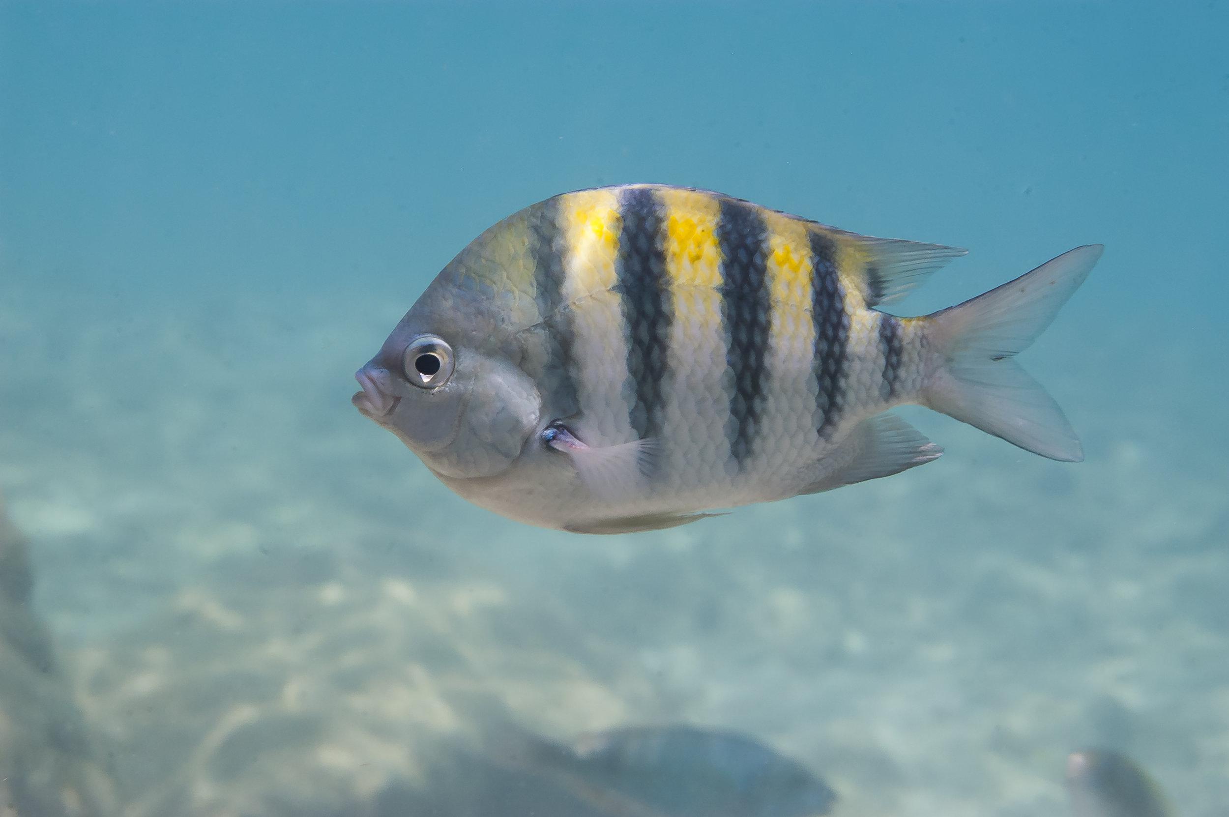 Betoverende natuur - Curaçao betovert: kristalhelder water met een aangename temperatuur, schilderachtige koralen en tropische vissen in alle kleuren.