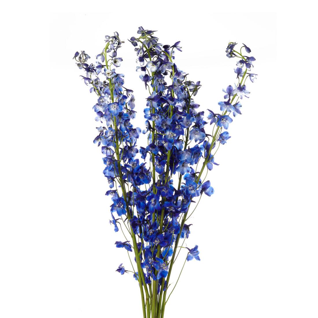 delphinium-dark_blue.jpg
