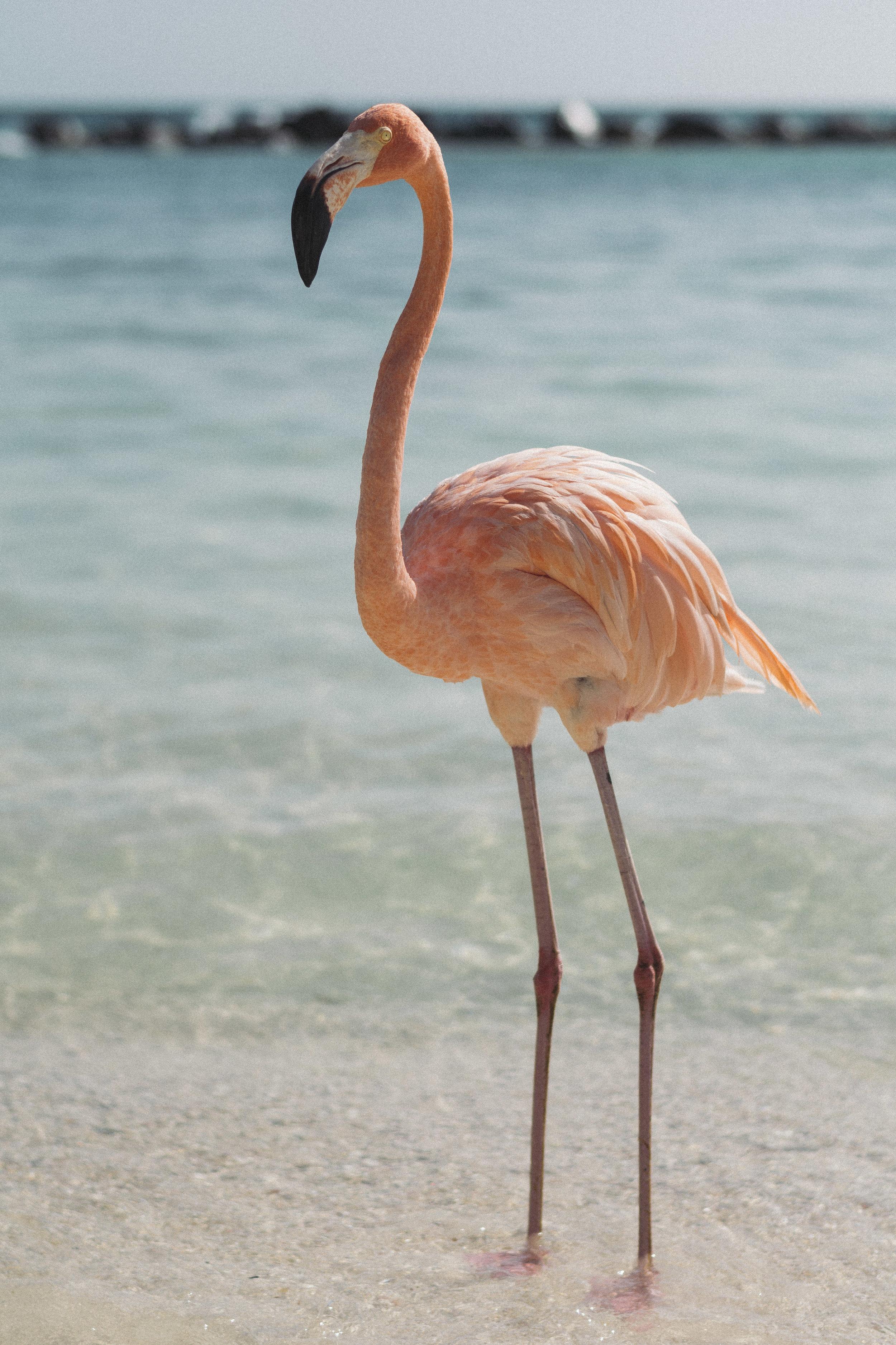 Visit Flamingo Beach