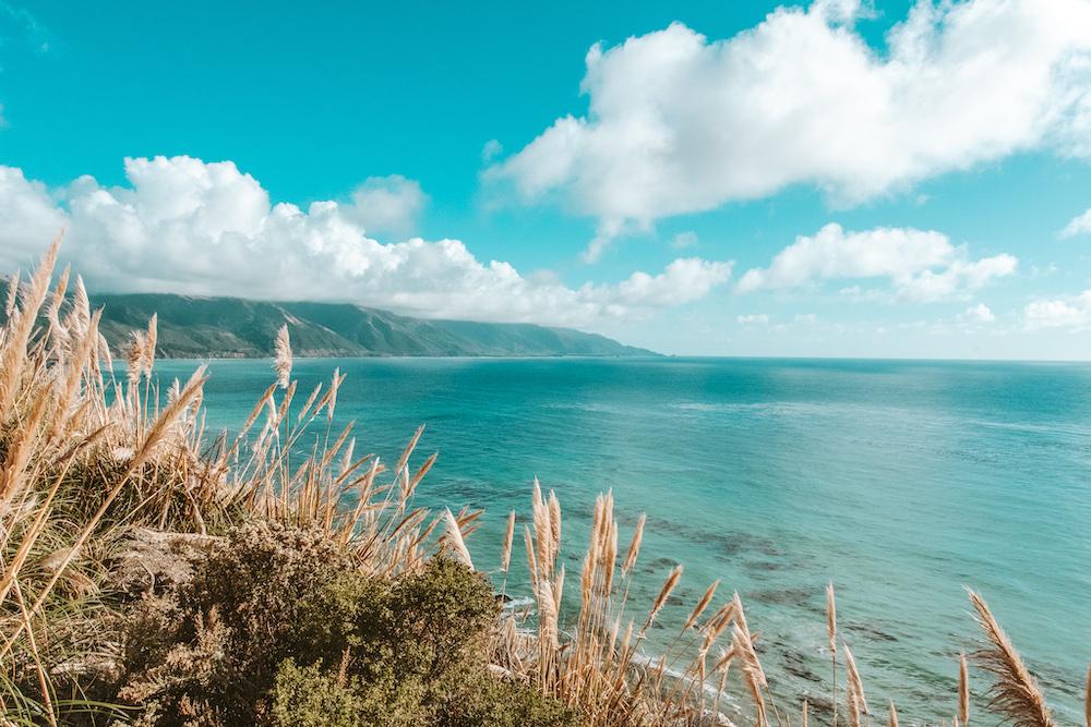 Pampas grass along Pacific Coast Highway in Big Sur | Cedar + Surf