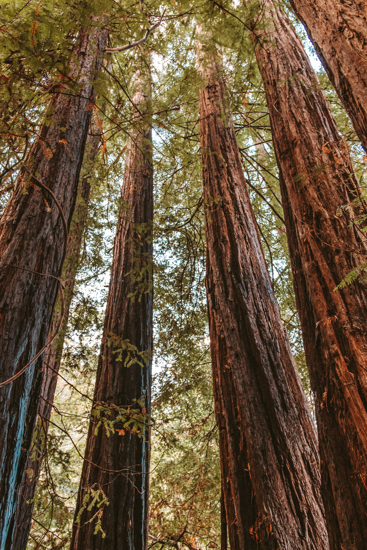 Redwood Grove Glen Oaks Big Sur Cabin  | Cedar + Surf