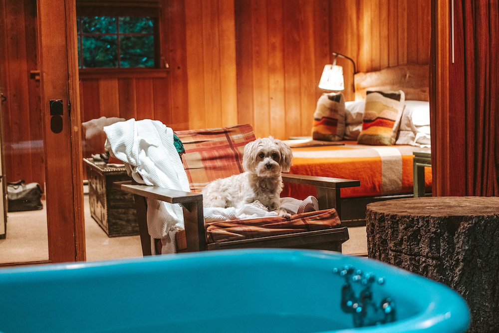 Glen Oaks Big Sur Cabin in the Redwoods | Cedar + Surf