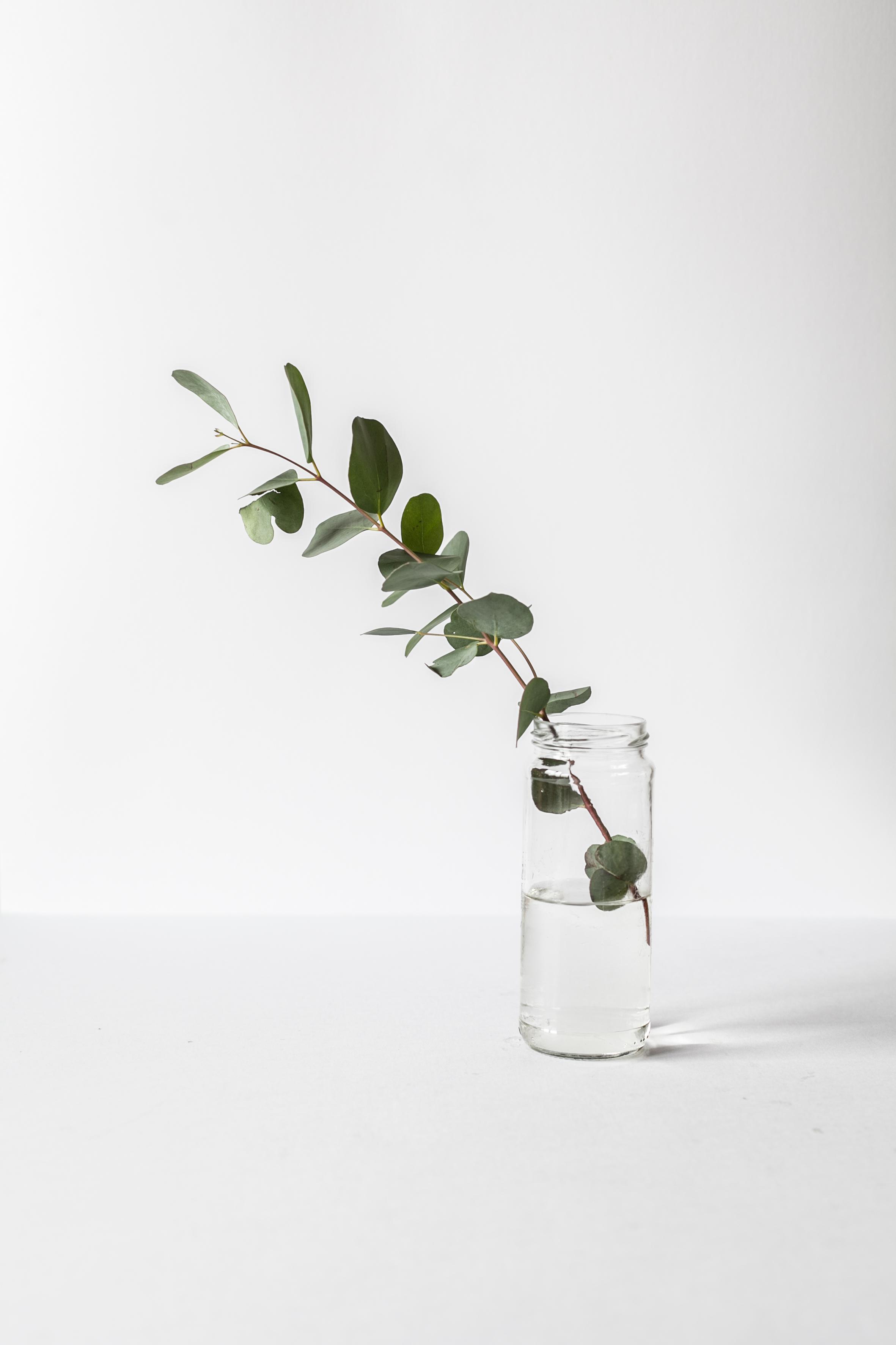 Eucalpytus in a vase   Cedar + Surf