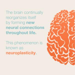 website-neuroplasticity-300x300.png