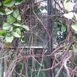 jardinbotanico.jpg