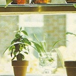 plantsinwindow_closeup.jpg