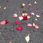 rosepetals2.jpg