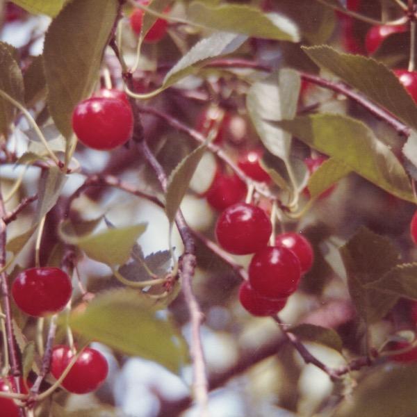 cherries2.jpeg