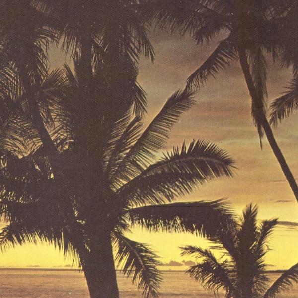 palms3.jpeg