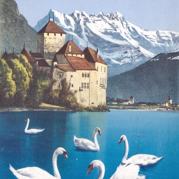 swans.jpeg