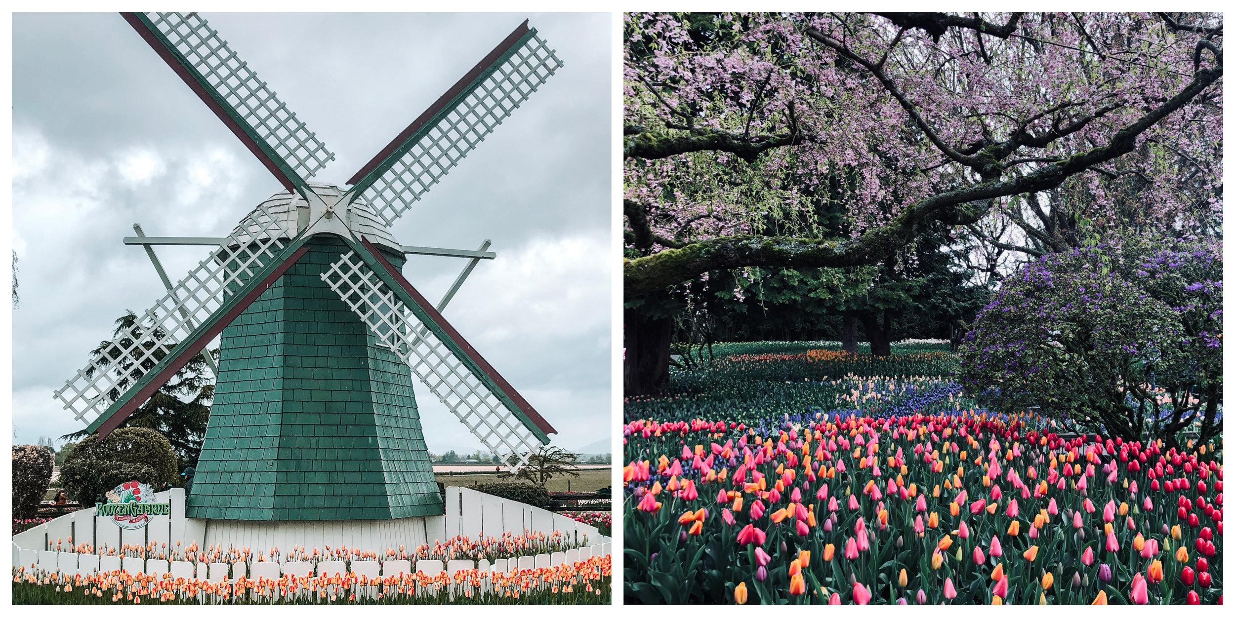 Roozengaarde Tulip Garden