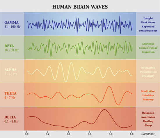 The major waves our brain generates.   Source here