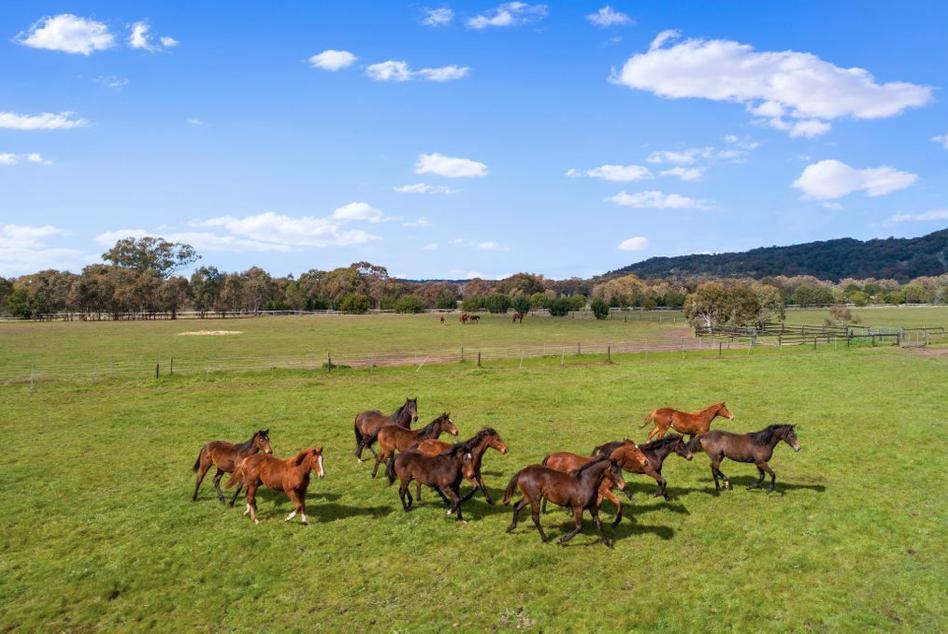 Horses 2.png