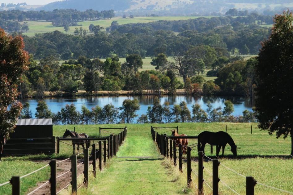 Lake Horses.png