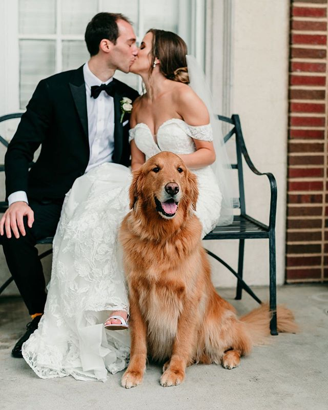 We consider ourselves to be expert pup wranglers! And that's certainly a good thing as we have already had two doggos take the walk down the aisle this year. But, Winston was such a good boy that we didn't have to do too much! All he needed was a friend to sit with him and to rub his head while mom and dad got married!