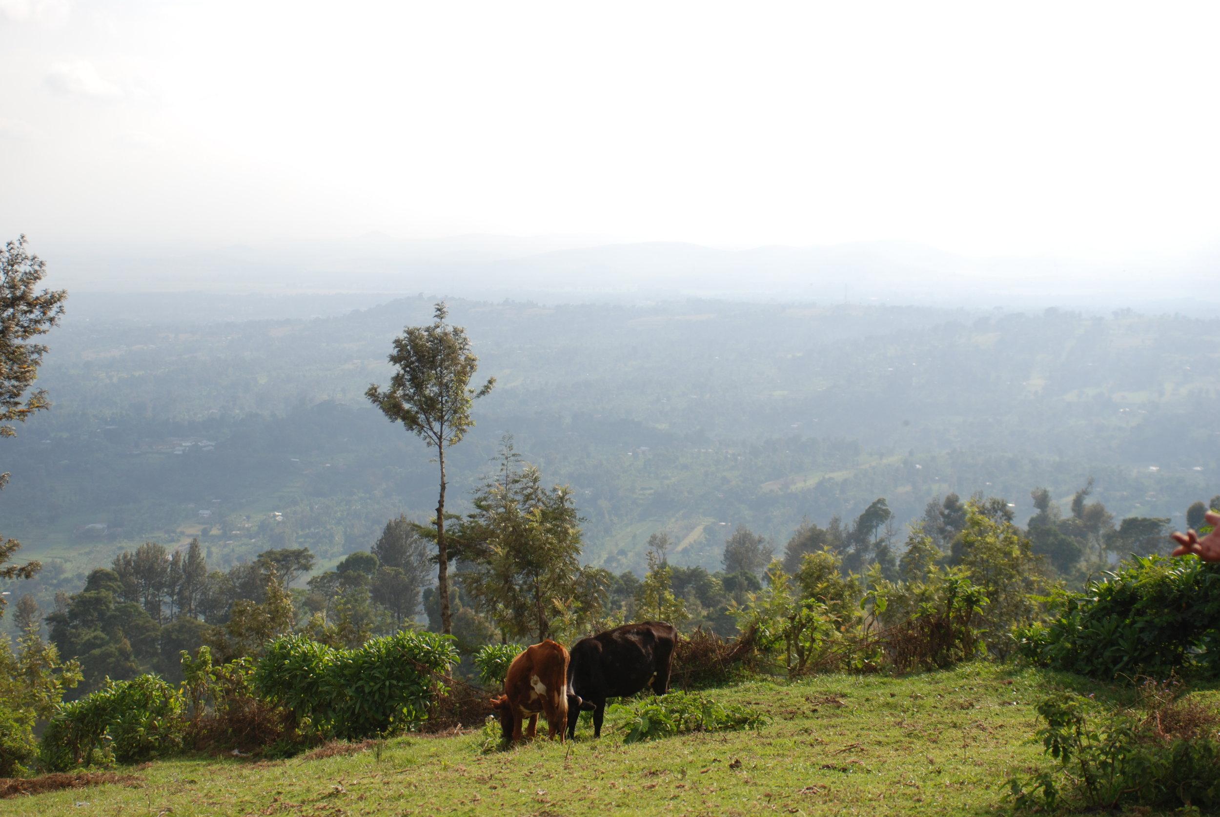 Tanzania 3 July '08 337.JPG