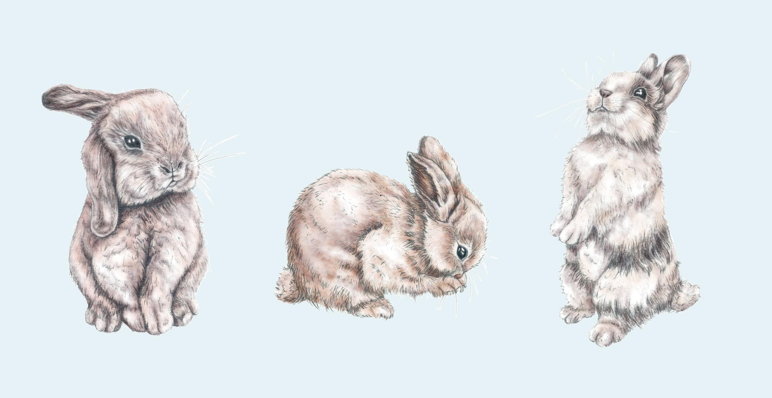 Rosenthal big bunny pattern.jpg