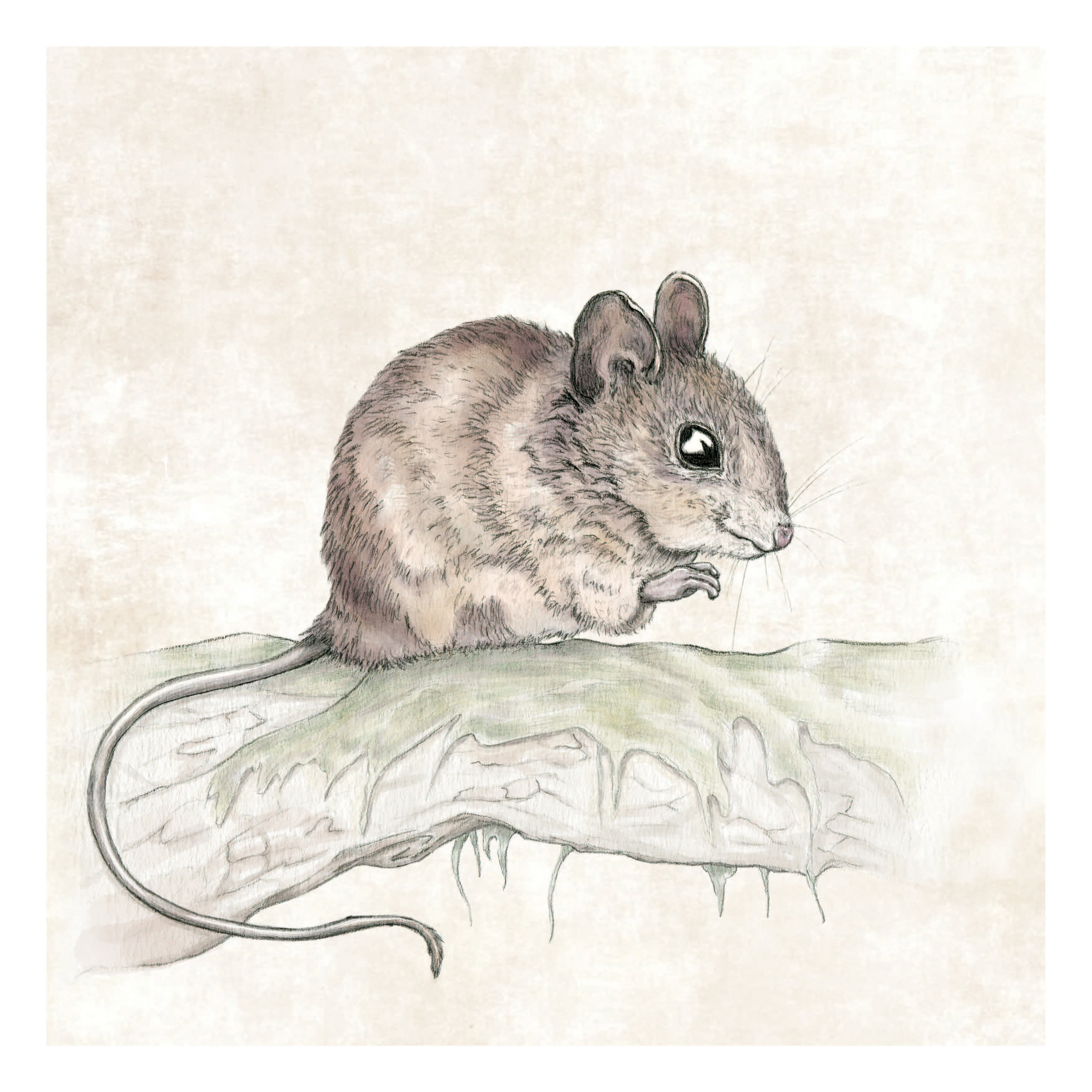 Mouse a3 square.jpg