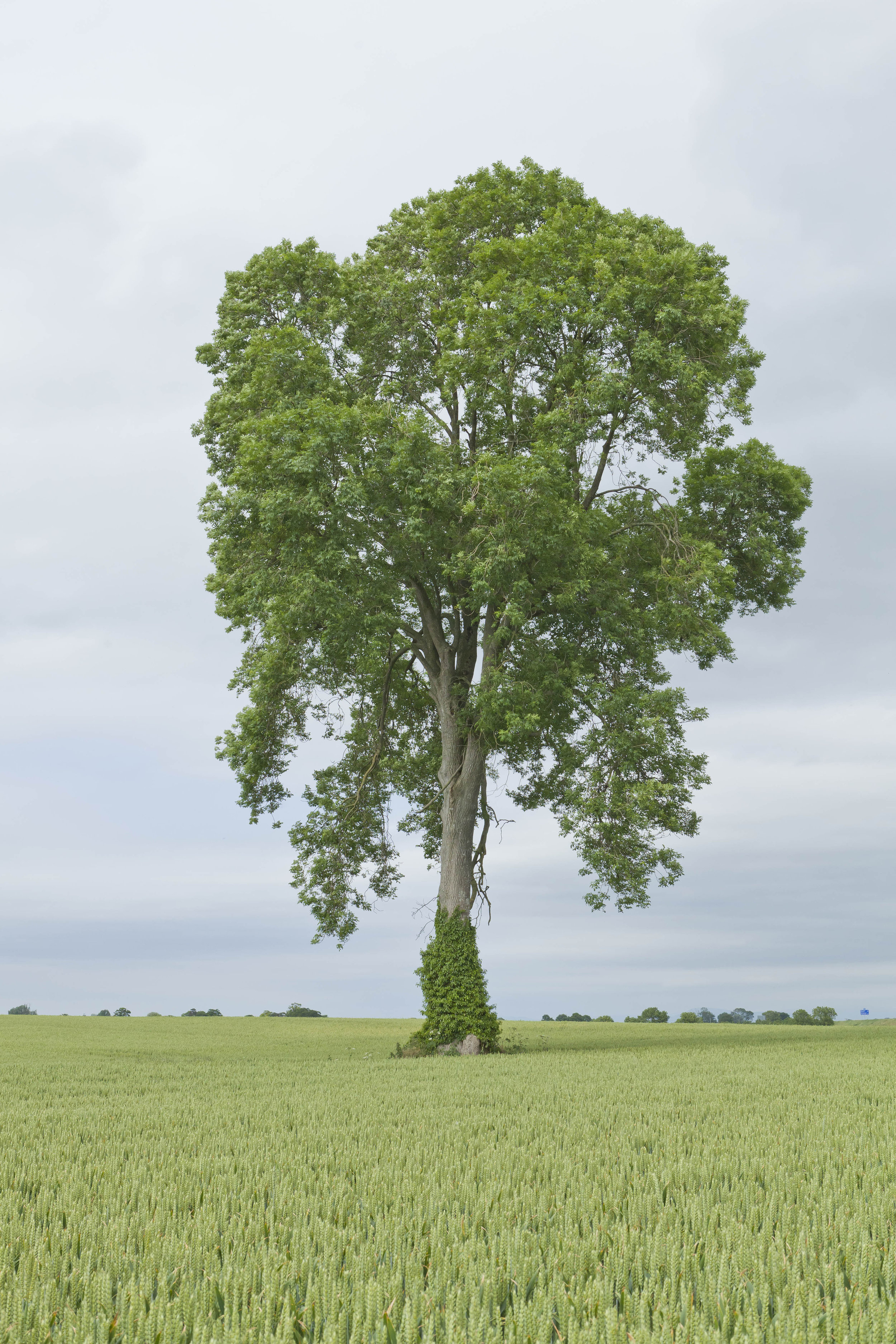 Tree, 2014, Archival pigment print
