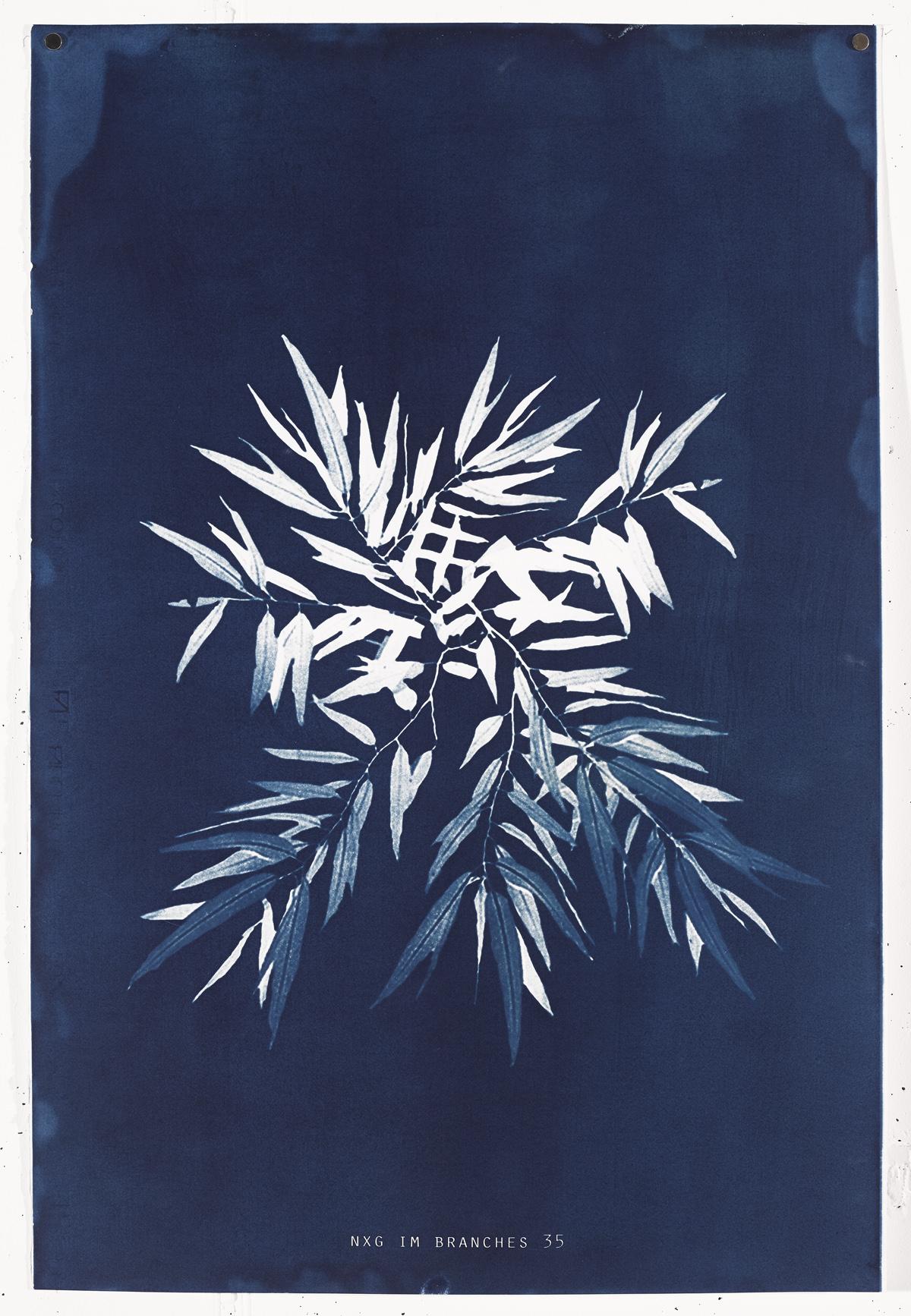 NXG_IM_BRANCHES_35 , Unique cyanotype print on Fabriano No.5, 90.4 x 61 cm, 2017.