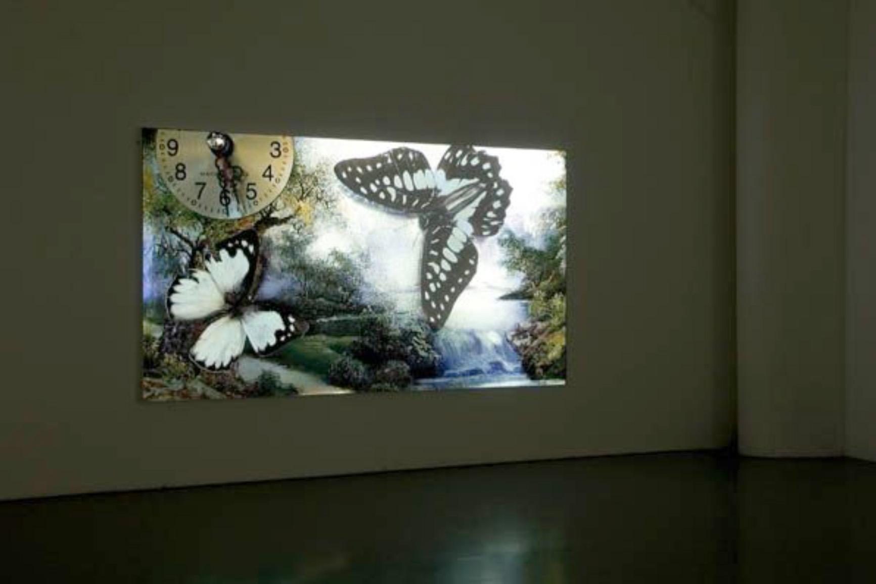 niamh o'malley butterfly.jpg