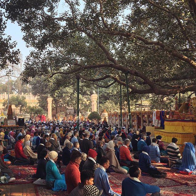Members of the Triratna Buddhist Order meditating beneath the Bodhi Tree at Both Gaya, India