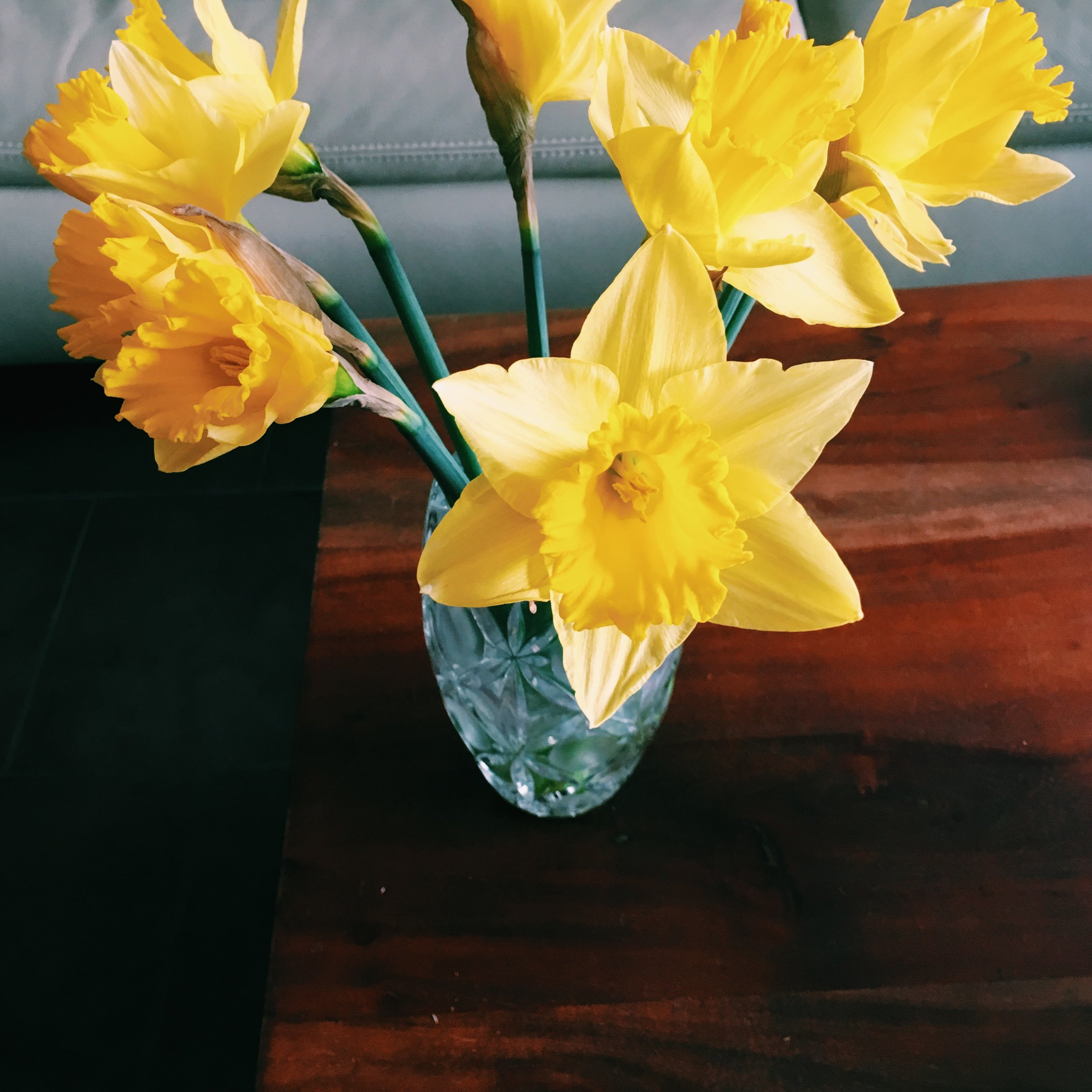8.Narcissus - スイセン
