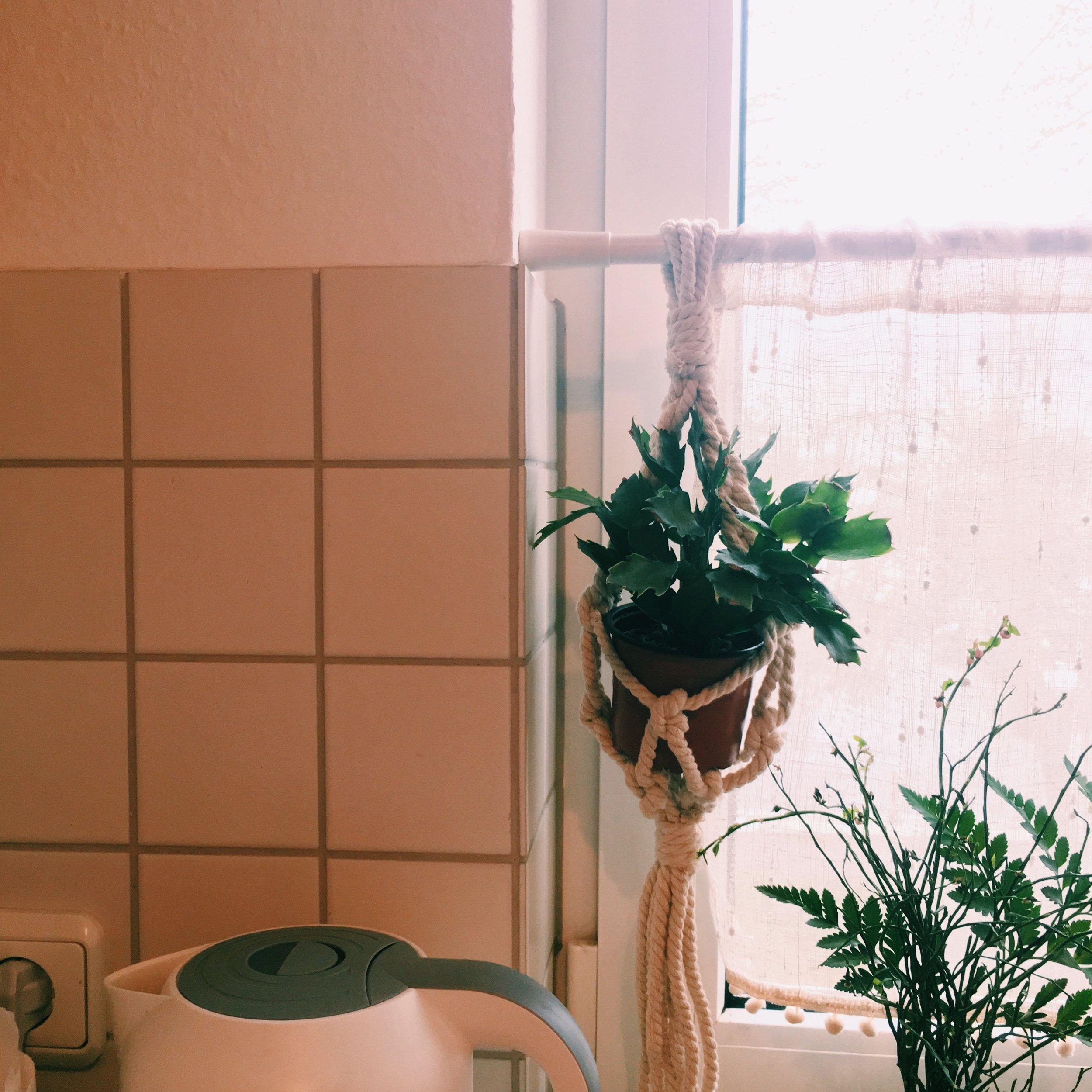 9.Christmas cactus - シャコバサボテン