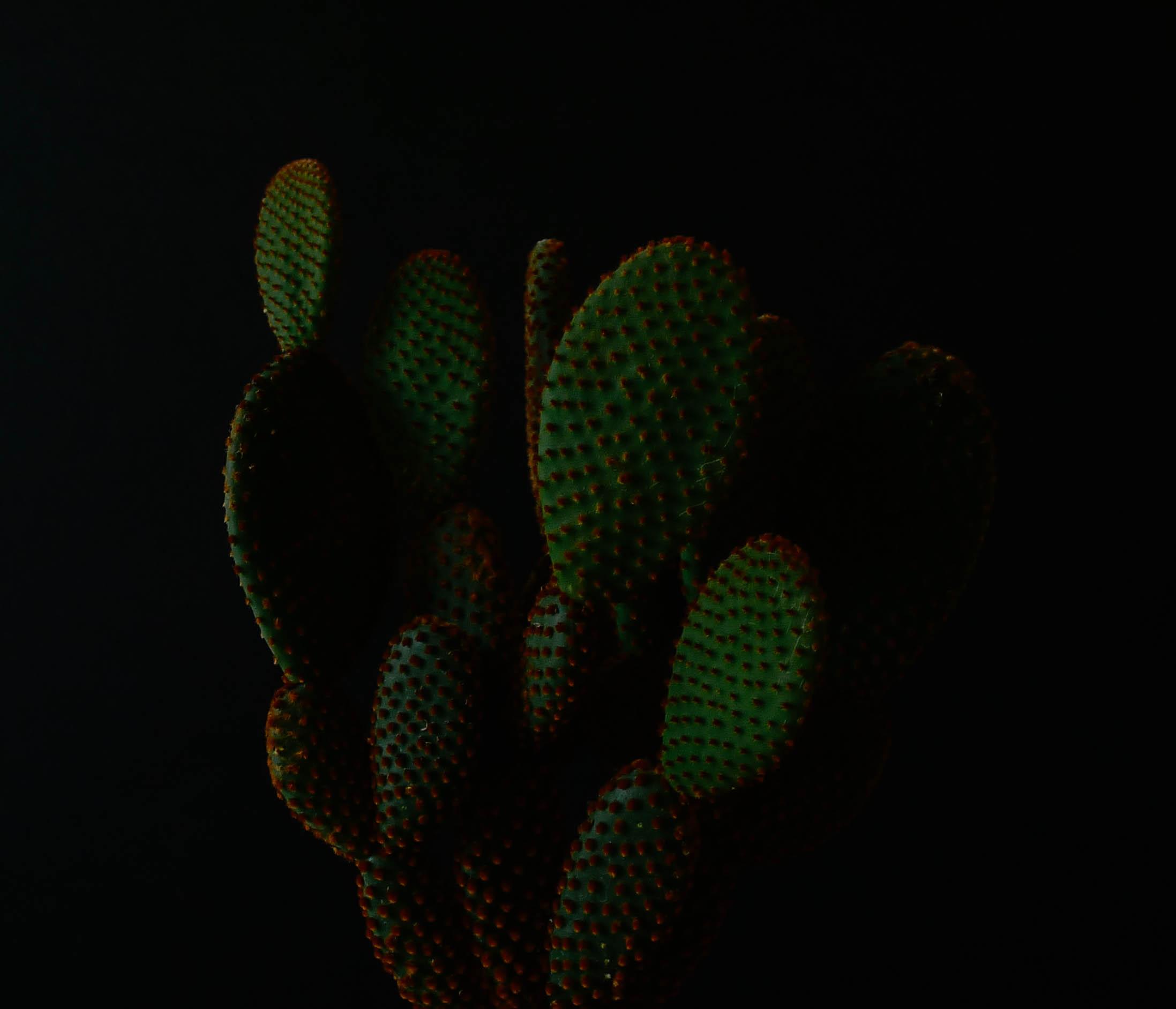 Vert1.jpg