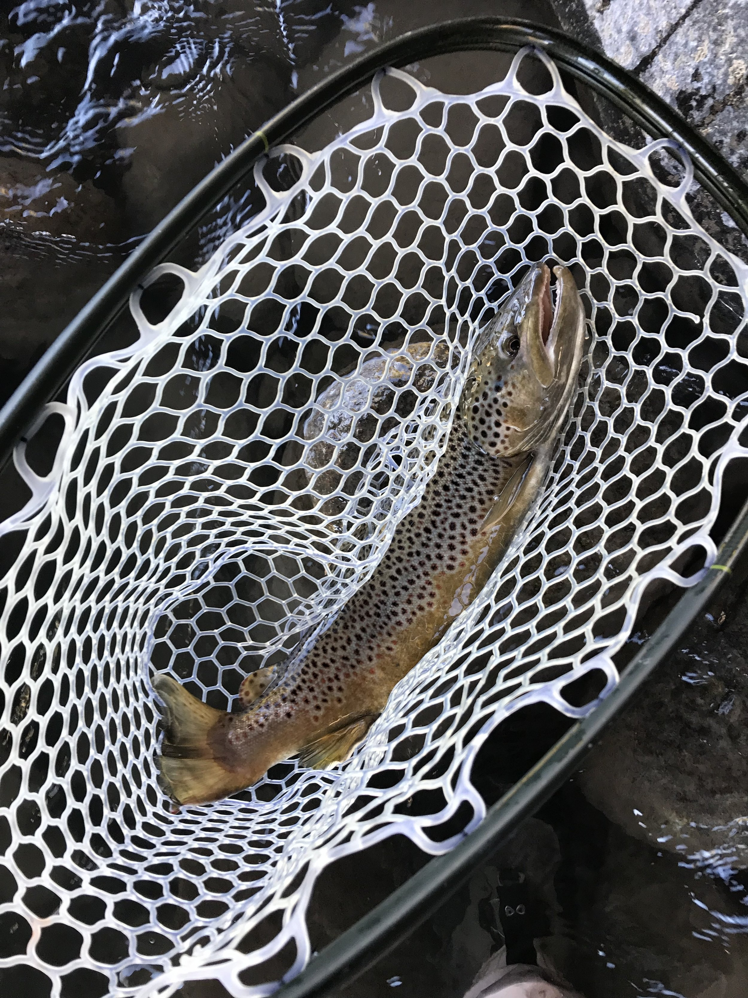 more dry fly butter