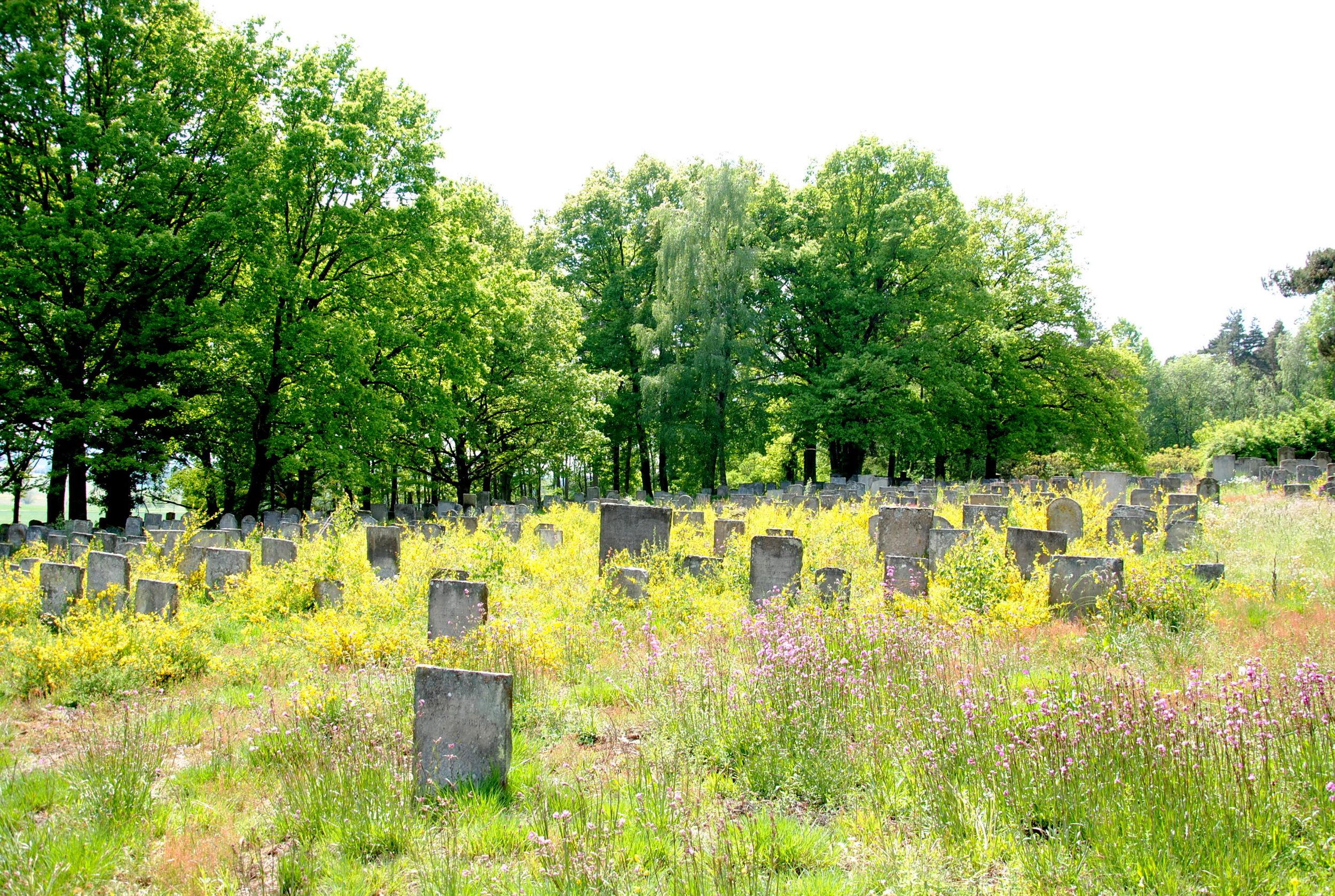 Jüdischer Friedhof Bechhofen. Foto: Claudia Dommel