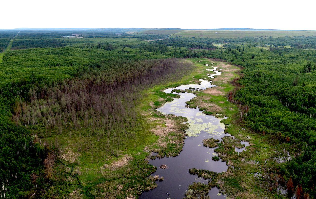 Wetlands near the proposed PolyMet site.  Photo by    Rob Levine