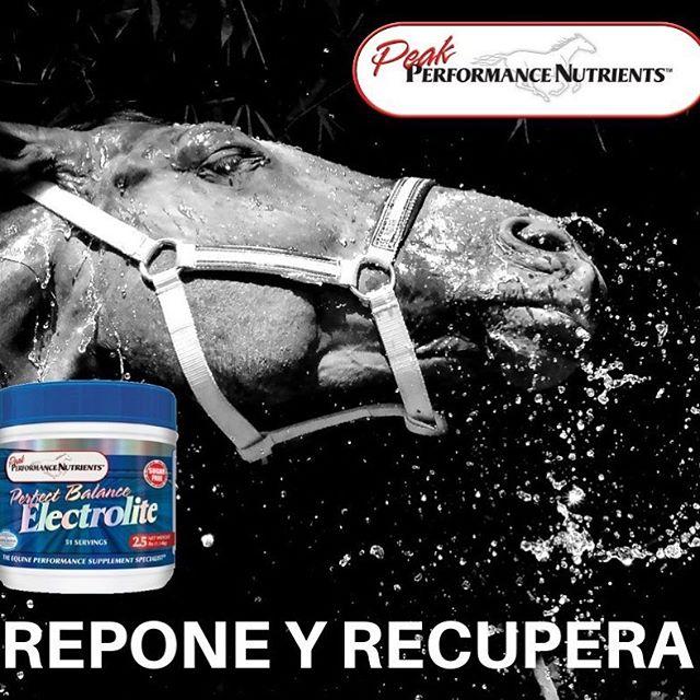Perfect Balance Electrolite está formulado para igualar la proporción de electrolitos perdidos en el sudor del caballo para una rehidratación y recuperación perfectas. Disponible en México en Chivali - Guadalajara: (0133) 3659-3628 CDMX: (0133) 5294-6615. En venta: https://chivali.com/collections/sanfe