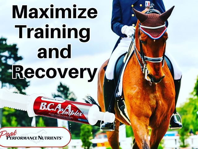 When your horse is tired from training and needs a boost, try B.C.A.A. Complex paste. Branches Chain Amino Acids are the preferred amino acids for muscle repair and growth. Guaranteed to improve your tired horse's attitude and energy or your money back. Show Safe. Use one tube per day. See results in 3 days. #dressage #showjumper