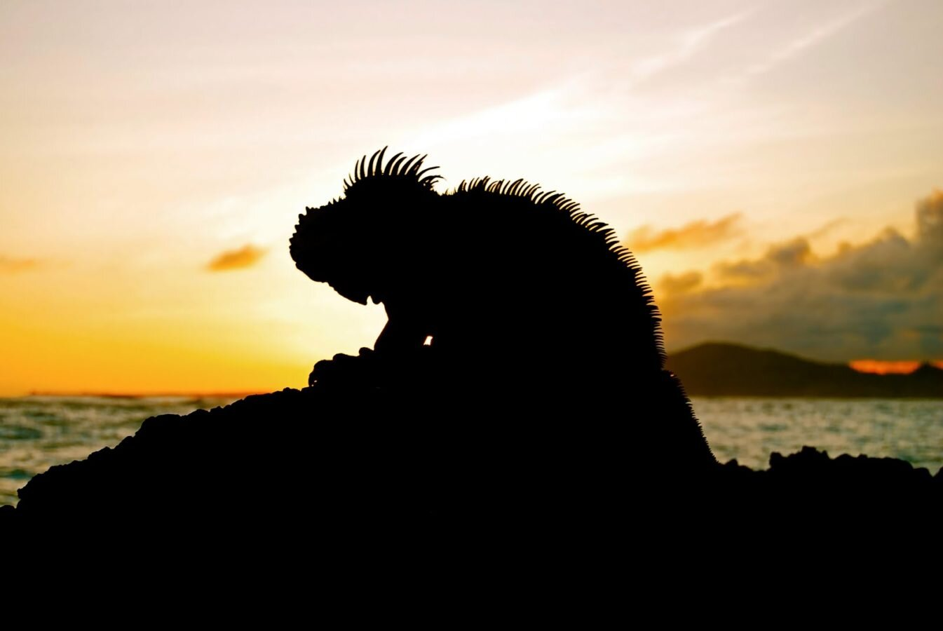 IguanaSunset.jpg