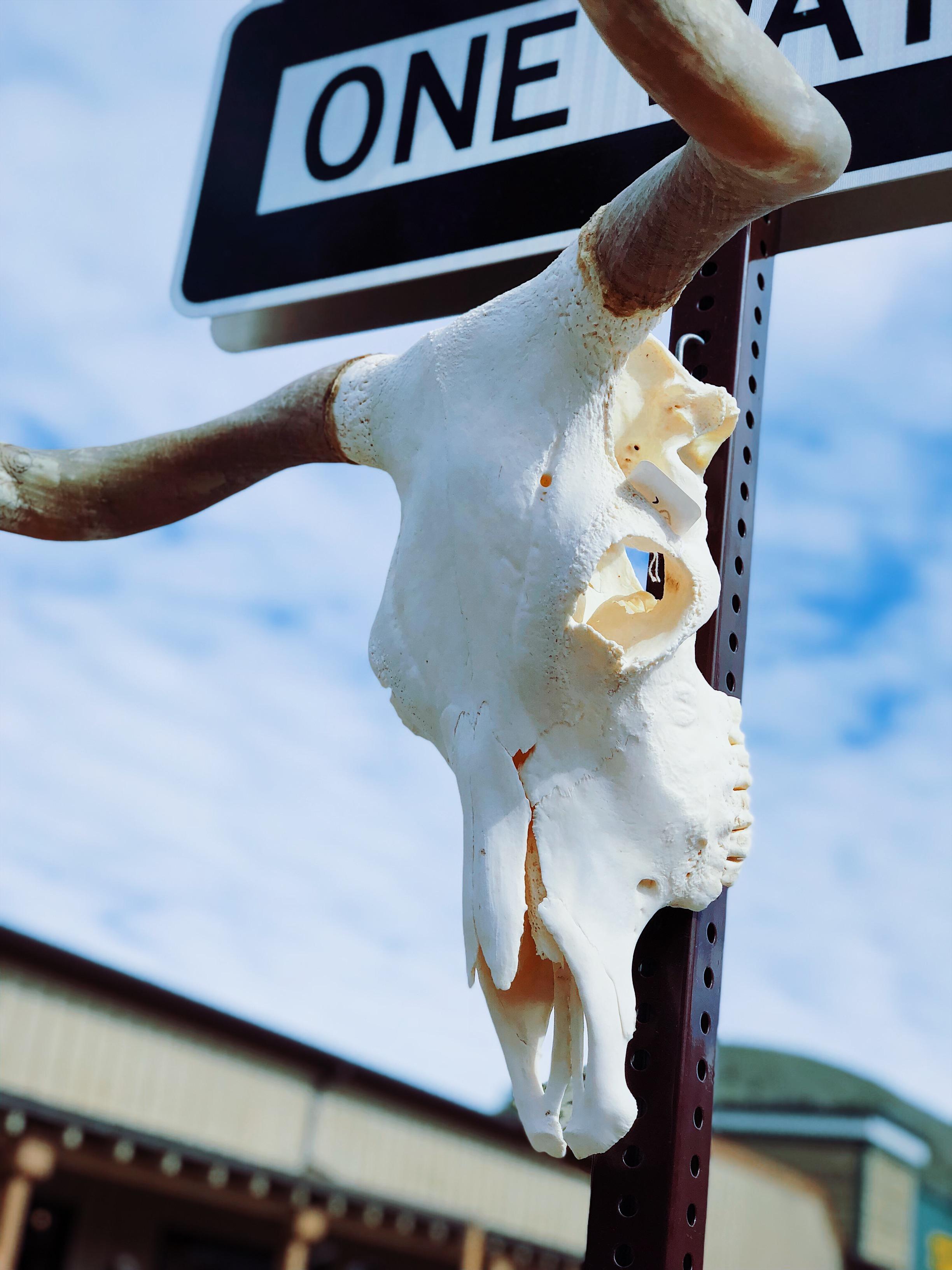 Jackson Hole, Wyoming's  World Famous Elk Antler Auction