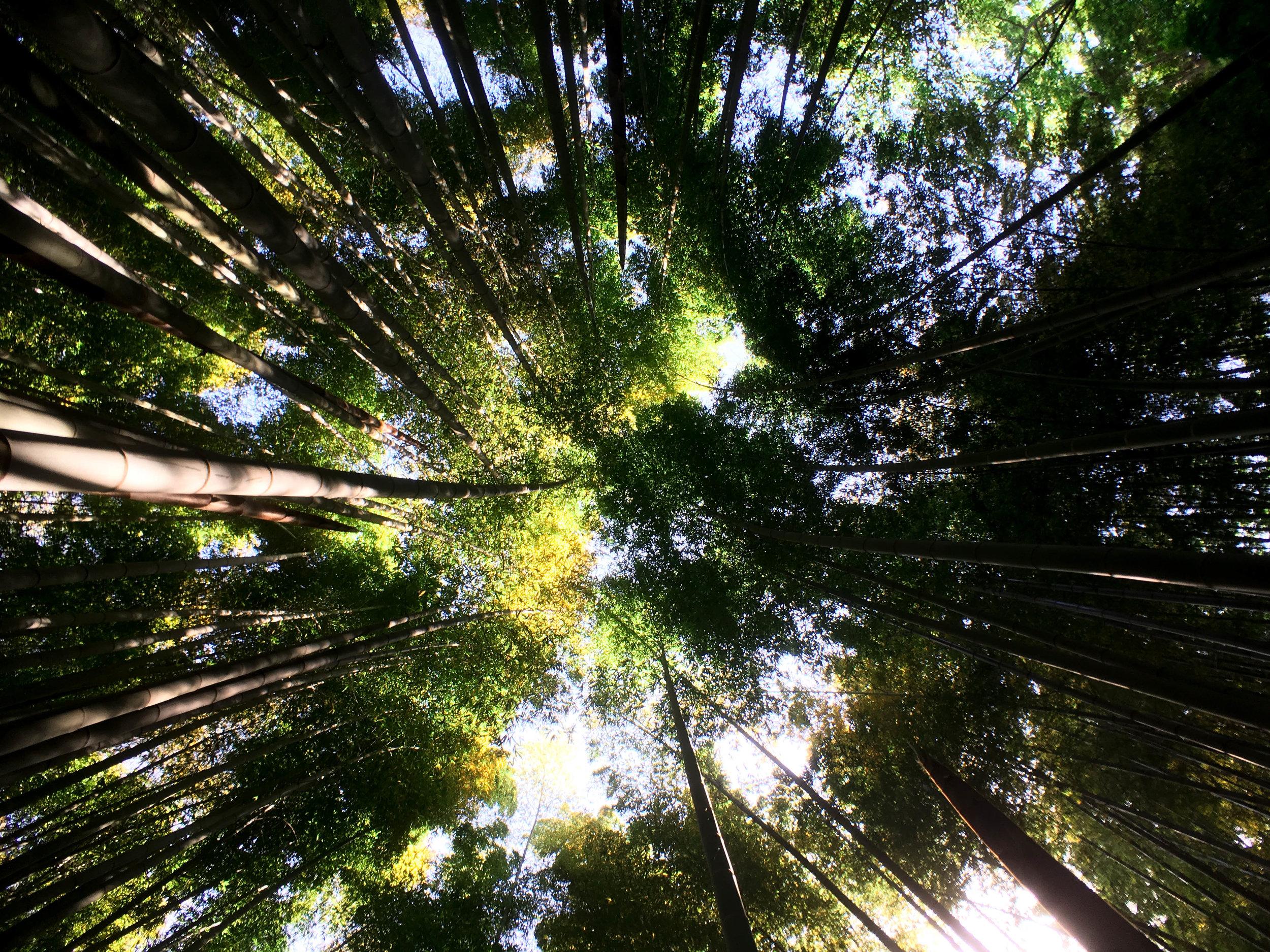 kamakura-forest.jpg