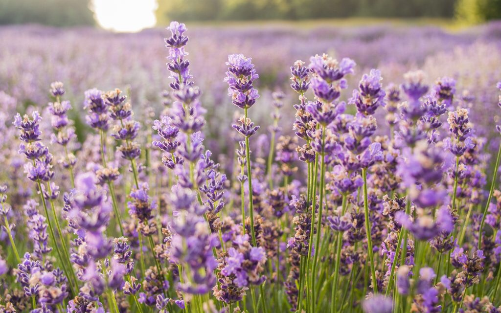 Linalool in our hemp products can be useful in controlling MS symtpoms.