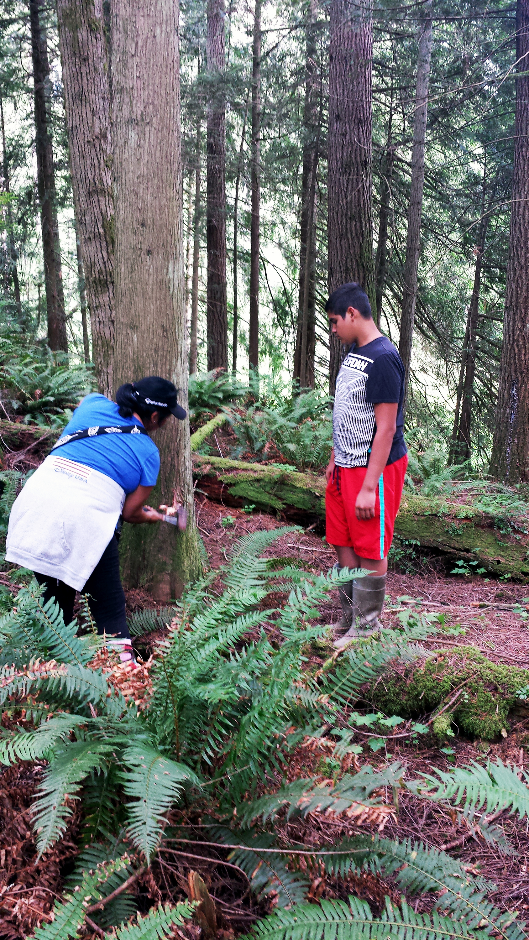 The Hunting & Wildlife Program also works with tribal youth to teach how to harvest cedar from selected private and public forests.  Photo: Brandon Nickerson & Vallentino Villaluz