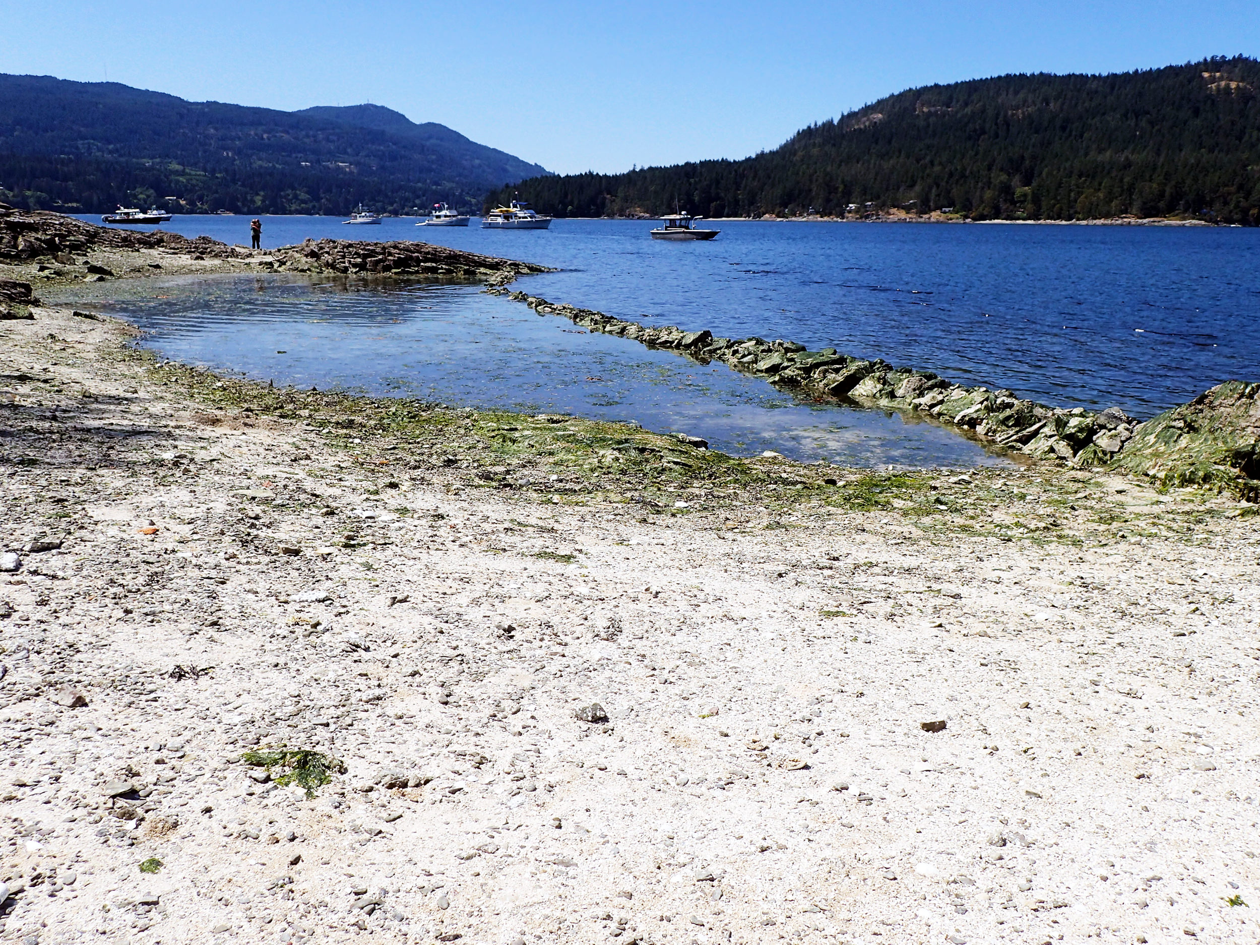 A small clam garden traps water and sediment, creating preferred habitat for clams on Russell Island, B.C. Photo: Courtney Greiner