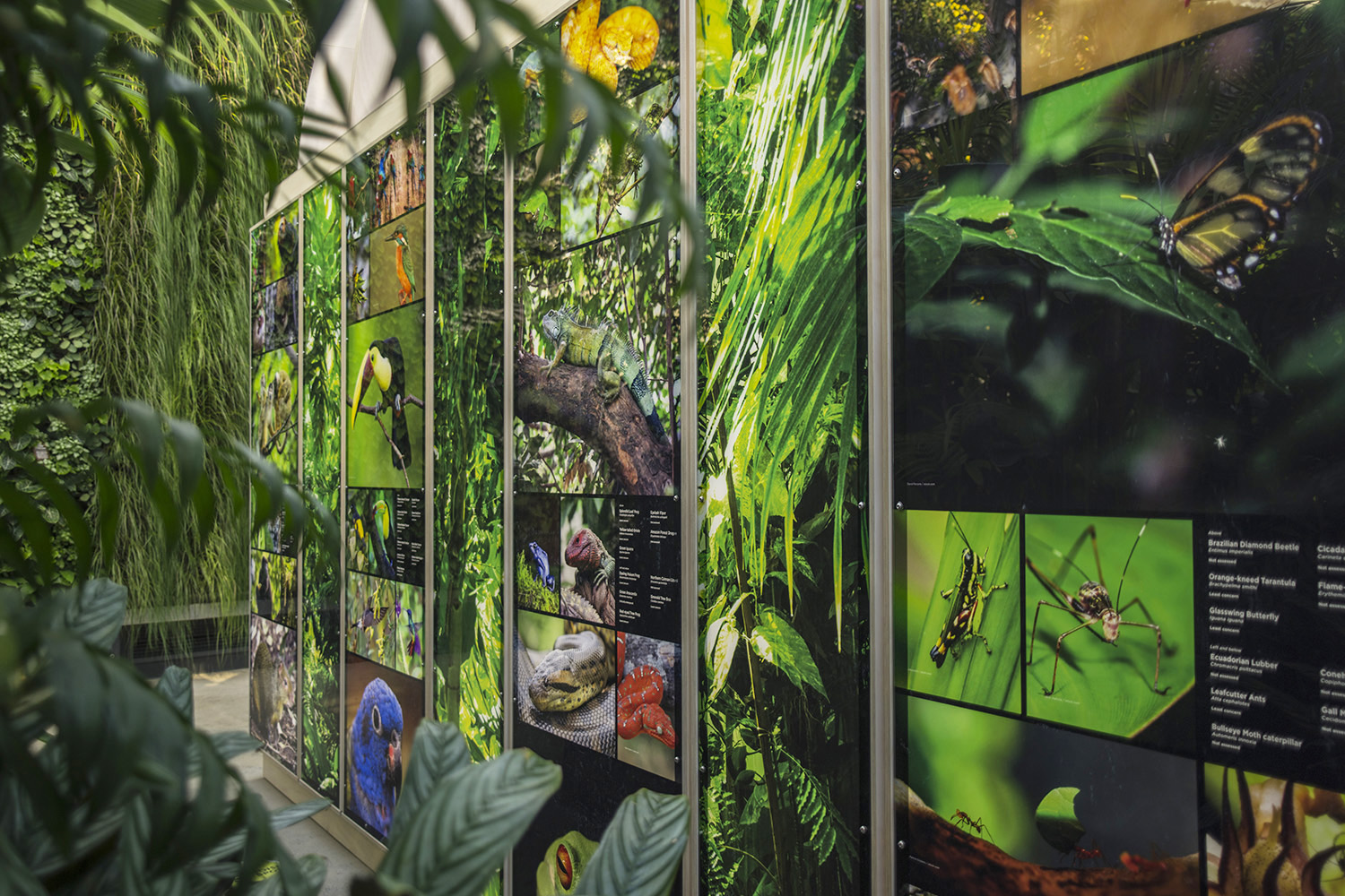 The exhibition explored all aspects of chocolate: the ecology of the cacao plant, the history of chocolate and its global spread, production methods and its physiological effects on the body.